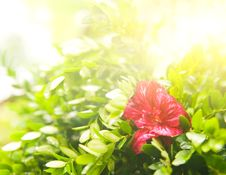 Free Flower At Sunny Day Stock Photo - 6096080