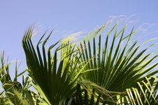 Free Palm Leaves In The Wind Stock Photos - 6096103