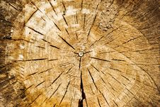 Free Wood Cut Texture Royalty Free Stock Image - 6096116