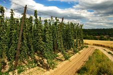 Free Hops Farm 26 Stock Photography - 6096222