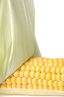 Free Corn Stock Photography - 6098042