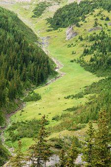 Free Alpine Grassland Royalty Free Stock Photos - 6098708