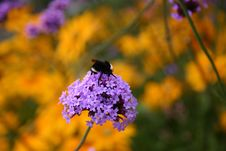 Free A Flower With A Bee Stock Photos - 6099143