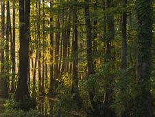 Free Sunlight Through Wet Land Forest Stock Photos - 6099503
