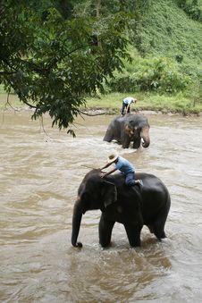 Free Elephants Take Shower Stock Photos - 6099523
