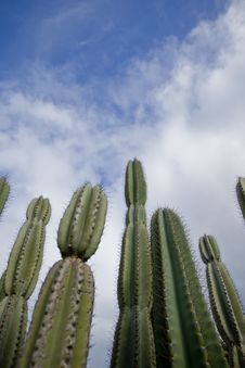 Free Cactus Perspective Stock Photo - 6099540