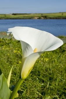 Free Water Lilly Royalty Free Stock Photography - 6099677