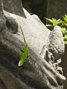 Free Lizard On Concrete Statue Stock Photo - 6099730