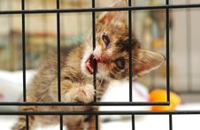 Cataract Rescue Kitten Royalty Free Stock Images
