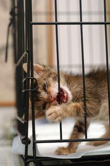 Free Cataract Rescue Kitten Royalty Free Stock Photos - 6099788