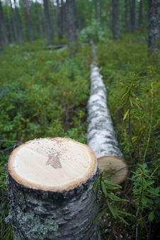 Free Deforestation Royalty Free Stock Photography - 6099847