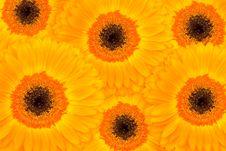 Free Vivid Orange Gerber Arangment Stock Photography - 6099962
