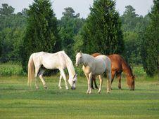 Free Three Horses Feeding Royalty Free Stock Photography - 6099977