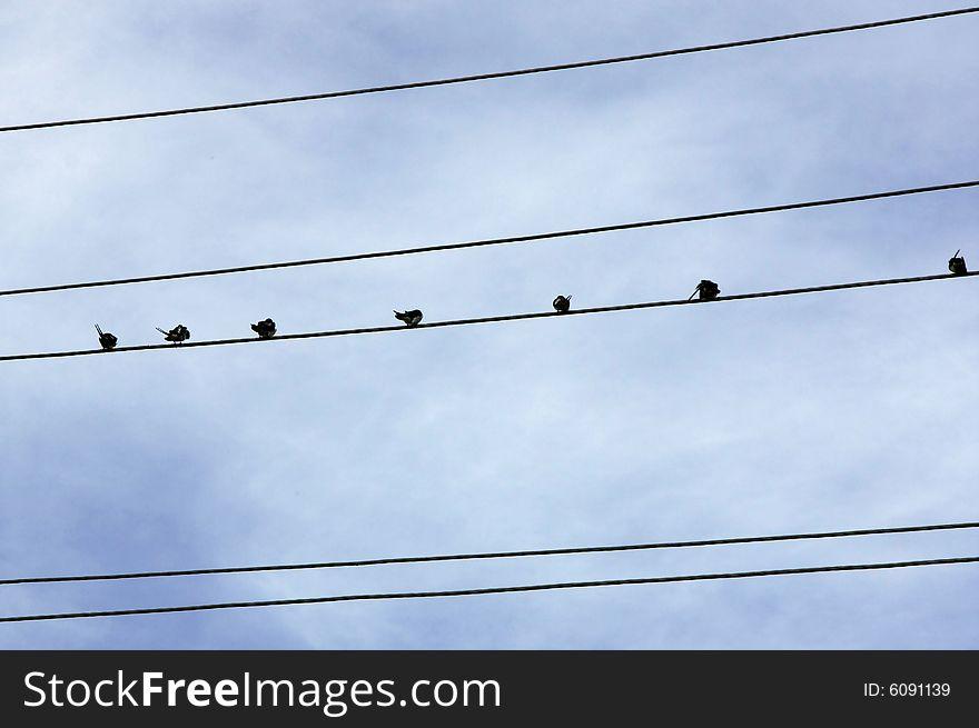 Birds on conductor