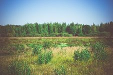 Free Green Forest Retro Royalty Free Stock Photos - 60973568