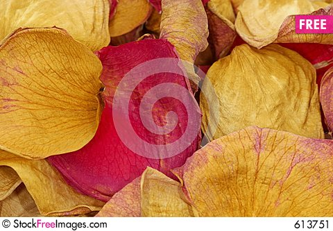 Free Dried Rose Petals Stock Image - 613751