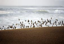 Free Perfect Sand And Birdflight Stock Photos - 610053
