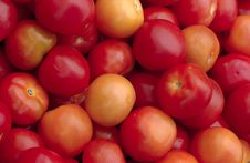 Free Tomatoes Royalty Free Stock Images - 610979