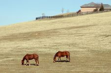 Free Horse Couple Stock Photo - 612520