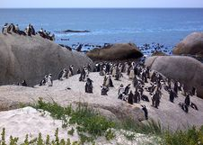 Free Penguins By Sea Stock Photos - 613203