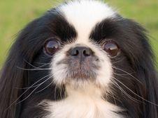Free The Dog Portrait Royalty Free Stock Photos - 613388