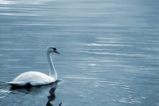 Free Swan6 Stock Photography - 614102