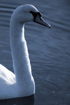 Free Swan22 Stock Photos - 614273