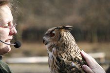 Free Eagle Owl Royalty Free Stock Photo - 614315