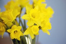 Free Daffodils In Vase Stock Photography - 614602