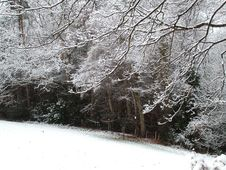 Free Snowy Field And Branches Stock Image - 614631