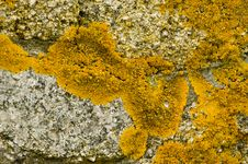 Free Yellow Moss Stock Images - 614704