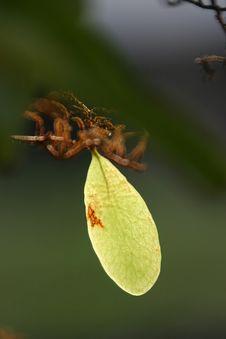 Free Fresh Leaf Stock Image - 616031