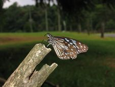Free Perched Butterfly Stock Photo - 616040