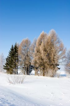 Free Frozen Trees Royalty Free Stock Image - 616406