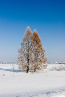 Free Frozen Larches, Winter Landscape Royalty Free Stock Images - 616409