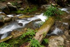 Free Mountain Stream Stock Photo - 616550