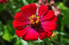 Free Red Petals Stock Photo - 616800