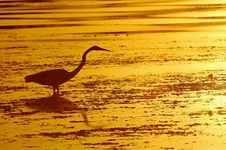 Free Heron In The Sunset Stock Image - 616801