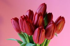 Free Red Tulips On Pink Background Stock Image - 616861