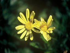 Free Wild Flowers Royalty Free Stock Photography - 617447
