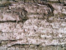 Free Tree Bark Royalty Free Stock Photos - 617548