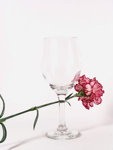 Free Carnation Wine Glass Stock Photography - 617882
