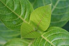 Free Leaf Over Leaves Royalty Free Stock Image - 617996