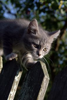 Free Kitten On A Fence Stock Photos - 619133