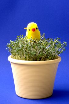 Free Easter Chicken Royalty Free Stock Images - 619229