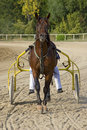 Free Race Carriage Stock Photo - 6102000
