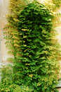 Free Ivy-covered Archy Door Stock Image - 6104131
