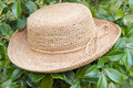 Free Straw Hat On Tree Stock Photo - 6105280