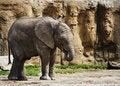 Free Baby Elephant Eating Royalty Free Stock Photo - 6109345