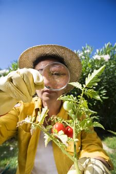 Free Gardening Stock Image - 6100751